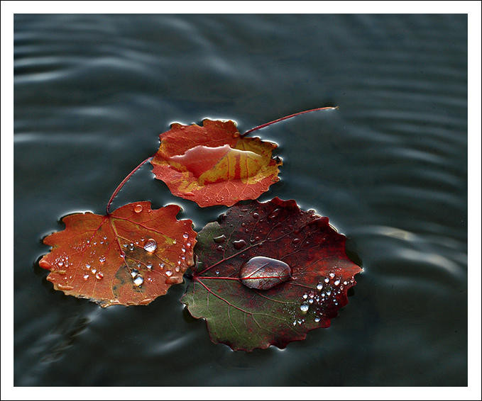 پاییز بارونی